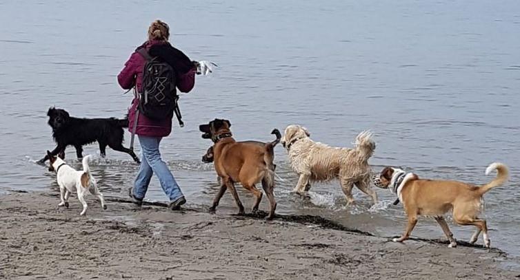 Hunde wollen Führung