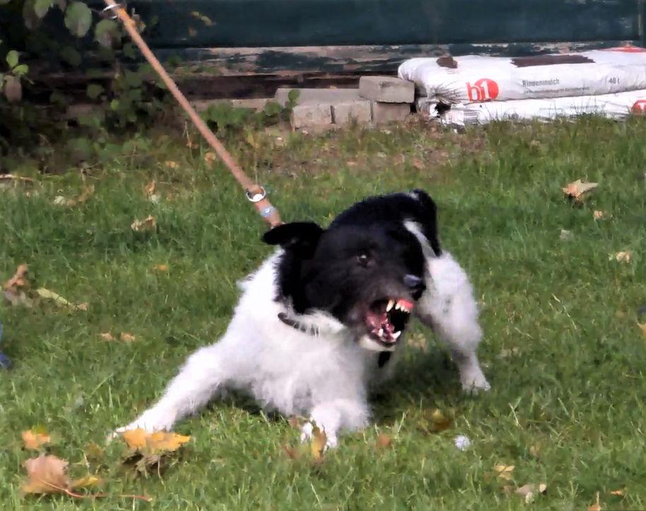 Problemhunde - Aggression beim Hund