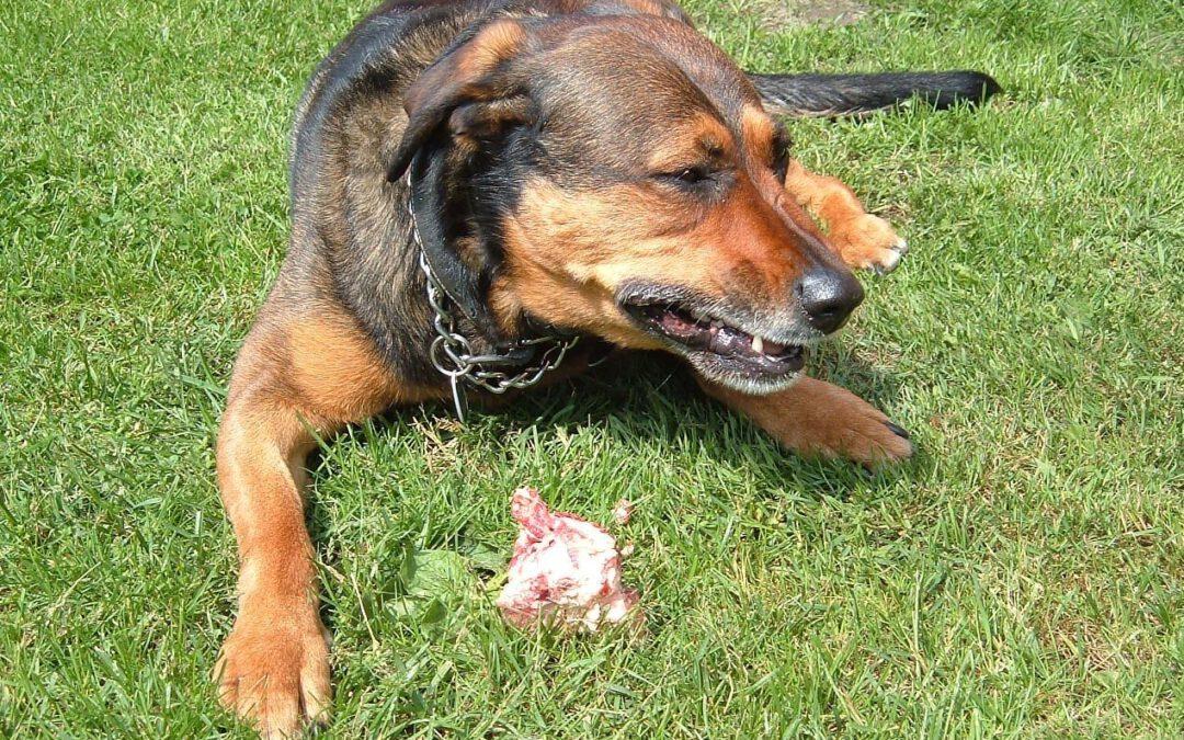 Futteraggression beim Hund