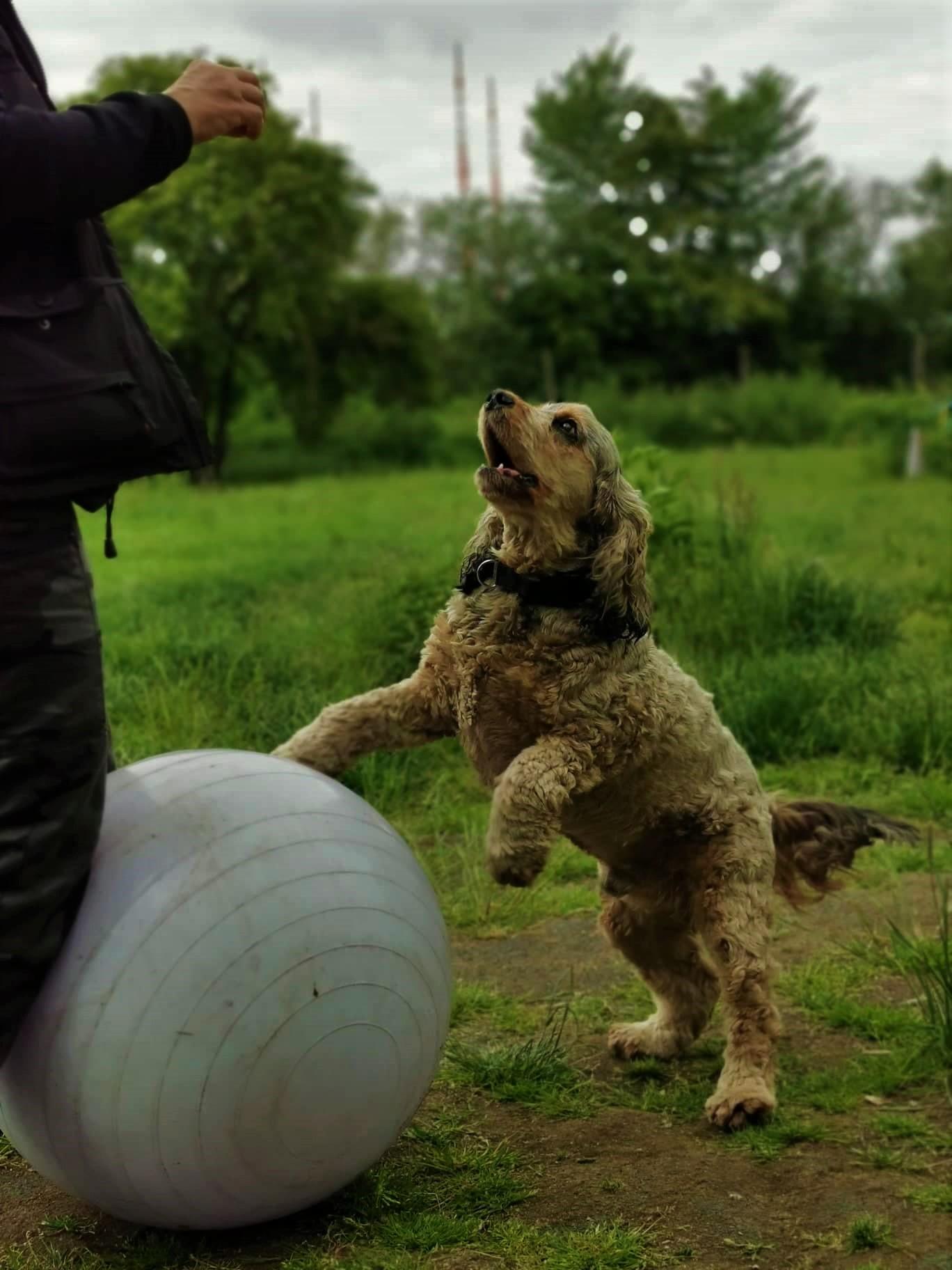 Beschäftigung für den Hund - Tricky sniff dogs
